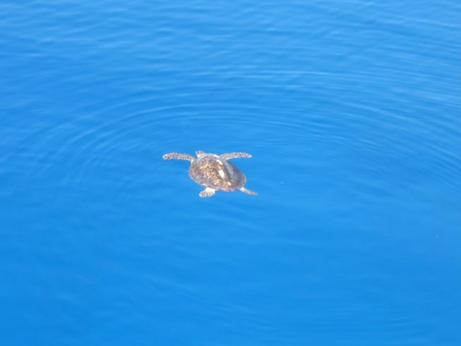 egypt2008-turtle